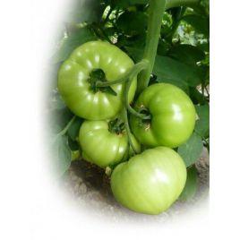 Гибрид 10 F1 семена томата дет. окр. 140-150 гр. (Элитный Ряд)