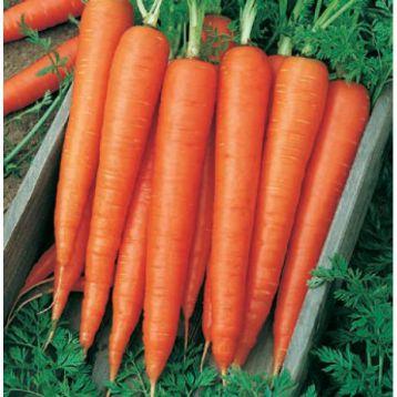 Велес F1 семена моркови Флаке (Свитязь)