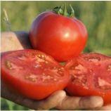 Мейс F1 семена томата дет. раннего 100-105 дн. окр.-прип. 220-240г красный (Yuksel)