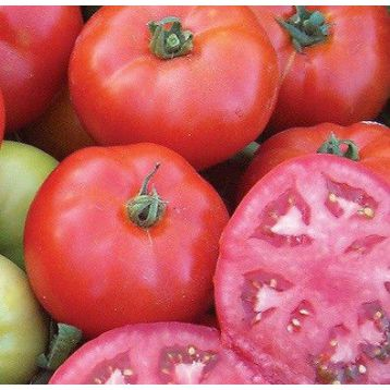 Мармара F1 насіння томата дет. (Yuksel)