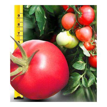 Малиновый Звон семена томата дет. (Свитязь)