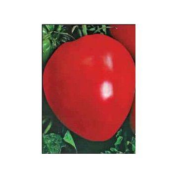 Волове сердце семена томата индет. розового (Свитязь)