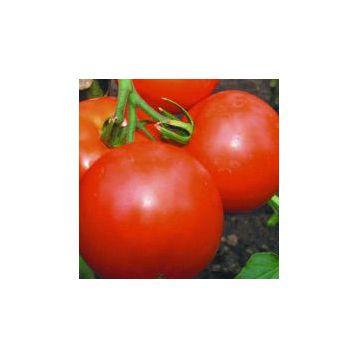 Персей семена томата дет. (Свитязь)