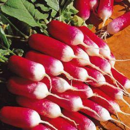 18 карат семена редиса (Свитязь)