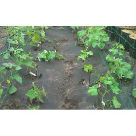 Агроволокно черное (плотность 50г/м2) 1,6х100 м. (Marma)