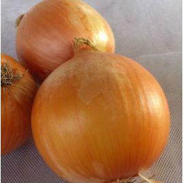 Октант F1 семена лука репчатого среднего (Гавриш) НЕТ СЕМЯН