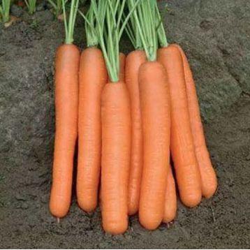 Тип Топ семена моркови Нантес (United Genetics)