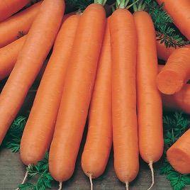 Лонг роте Штумпфе семена моркови Нантес (Chrestensen)