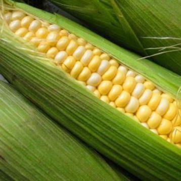 Самит F1 семена кукурузы суперсладкой (Dorsing Seeds)