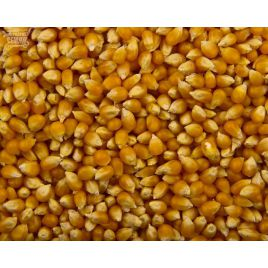 Попкорн семена кукурузы рисовой 72-80дн. 12-14см (Польша) НЕТ ТОВАРА