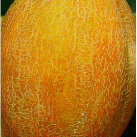 Приднестровская семена дыни тип Ананас средней 70-75 дн. 0,7-1,8 кг овал. оран./бел. (Элитный ряд)