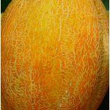 Приднестровская семена дыни (Элитный ряд)