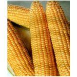 Димакс F1 семена кукурузы суперсладкой (May Seeds)