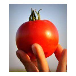 Саргас F1 семена томата дет. среднераннего окр. 160-180г (Yuksel)