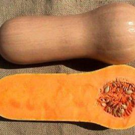 Страдивари семена тыквы мускатной (Гавриш)
