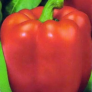Квадрато Асти красный семена перца сладкого (SAIS)