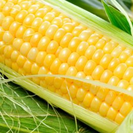 Любава F1 семена кукурузы кормовой (Польша) НЕТ ТОВАРА