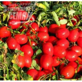 Гелекси F1 (Галакси F1) семена томата дет. среднего слив. 70-90 гр. (Esasem)