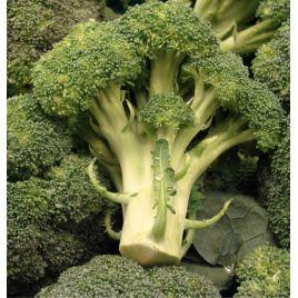 Цезарь семена капусты брокколи средней 85 дн. 300-450 гр. (Элитный ряд)