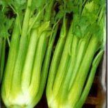 Гелиос (Helios) семена сельдерея черешкового (Элитный ряд)