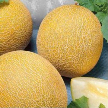 Титовка семена дыни (Украина)