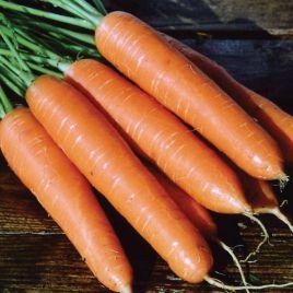 Роте Ризен семена моркови (Польша)