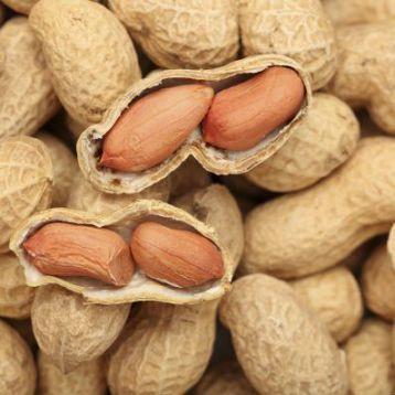 Арахис испанский 344 семена (GL Seeds)