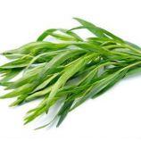 Байкал семена тархуна (GL Seeds)