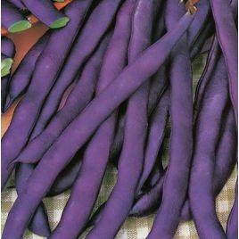 Блаухильде семена фасоли спаржевой вьющаяся фиолет. (GL Seeds) НЕТ ТОВАРА