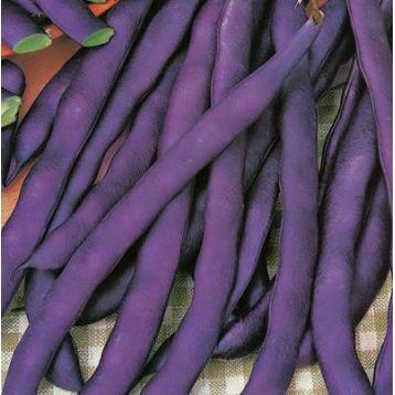 Блаухильде семена фасоли вьющаяся фиолетовой (GL Seeds)