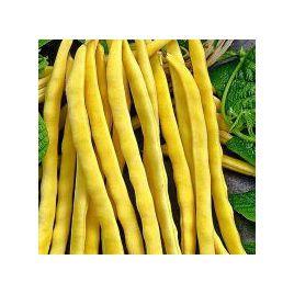 Золотая звезда семена фасоли спаржевой желт. (GL Seeds)