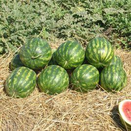 Кримсон Делайт F1 семена арбуза тип Кримсон Свит раннего 56-58 дней 8-12 кг (Hollar Seeds) НЕТ ТОВАРА