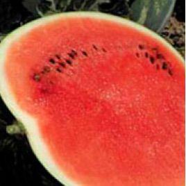 Троя F1 семена арбуза тип Кримсон Свит (May Seeds)