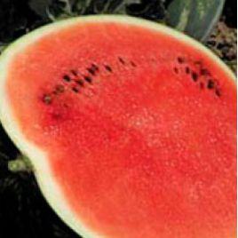 Троя F1 семена арбуза тип Кримсон Свит ультрараннего 55 -60 дней 5-15 кг окр. (May Seeds) НЕТ ТОВАРА