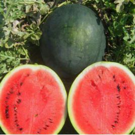 Шуга Бейби семена арбуза раннего 65-70 дн. 5-7 кг окр. (Servise plus (GSN) СДБ)
