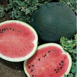 Шуга Бейби семена арбуза (United Genetics)