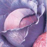 Лангедейкер Дауер семена капусты к/к поздней (Satimex)