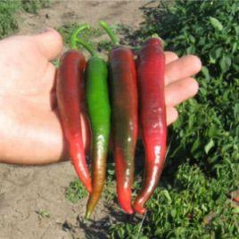 Иллича семена перца острого (May Seeds)