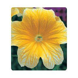 Либра Yellow семена сальпиглоссиса дражированные (Kitano Seeds)