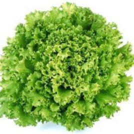 Назир семена салата тип Дуболистный (Enza Zaden) НЕТ СЕМЯН