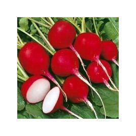 Гиганте Сикуло семена редиса (SAIS)