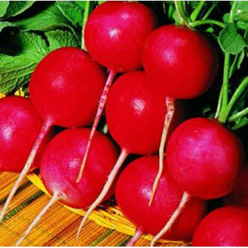 Сакса 3 семена редиса 25 дн. (SAIS)