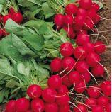 Селеста F1 семена редиса (калибр 275-3 мм) (Enza Zaden)