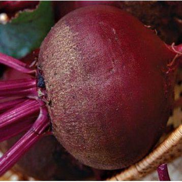 Бордо семена свеклы столовой (Свитязь)
