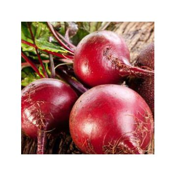 Детройт Дарк Ред семена свеклы столовой (Innova Seeds)