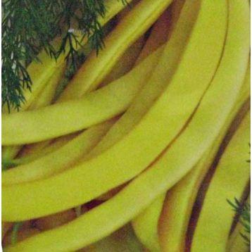 Богема семена фасоли спаржевой (Свитязь)