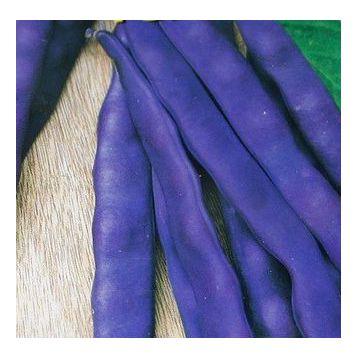 Голубка семена фасоли спаржевой (Свитязь)