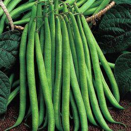 Королева Некар семена фасоли спаржевой (GL Seeds)