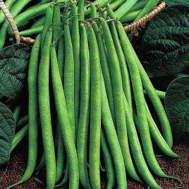 Королева Некар семена фасоли спаржевой зел. (GL Seeds)