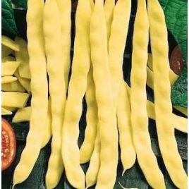Марвел ди Венеция семена фасоли спаржевой желт. (GL Seeds)